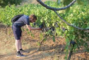 Berat: Roshnik Village Wine Tasting Tour