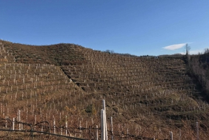 From Tirana: Durres & Lalzi Bay Wine Tasting Tour