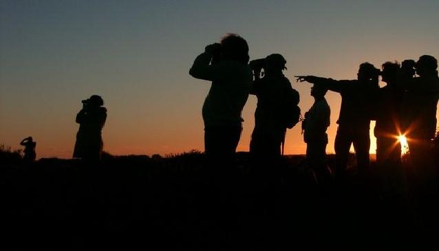 Birdwatching in the Algarve