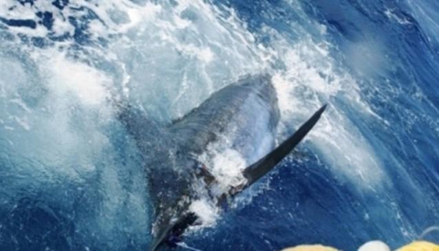 Algarve Deep Sea Fishing Seafaris