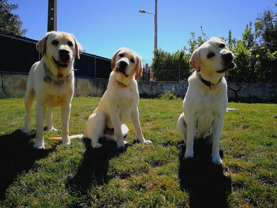 Iron Dog Algarve