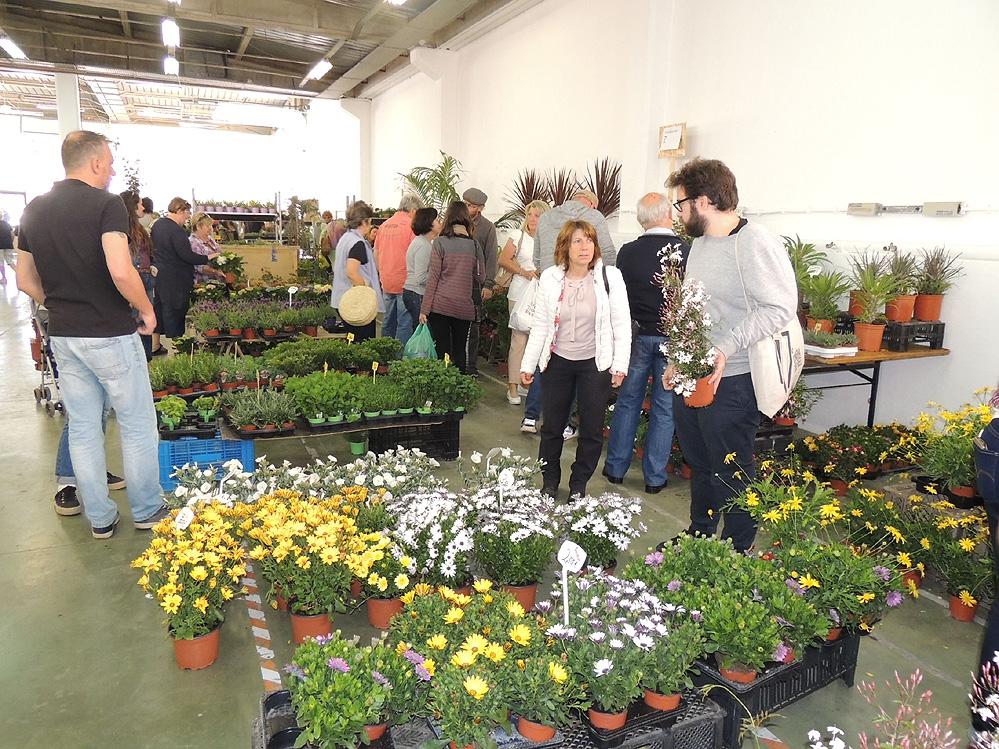 11th Autumn Mediterranean Gardening Fair