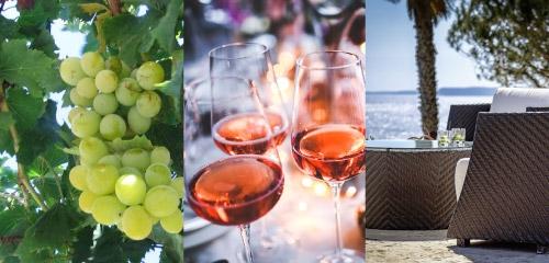 Algarve for Wine Lovers at Vivenda Miranda
