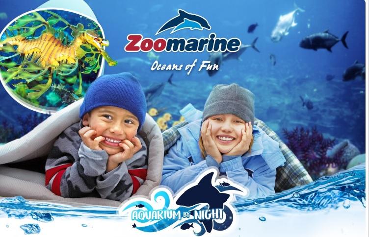 Aquarium by Night at Zoomarine