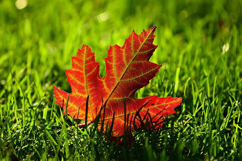 Autumn Immune System Boost at Vivenda Miranda