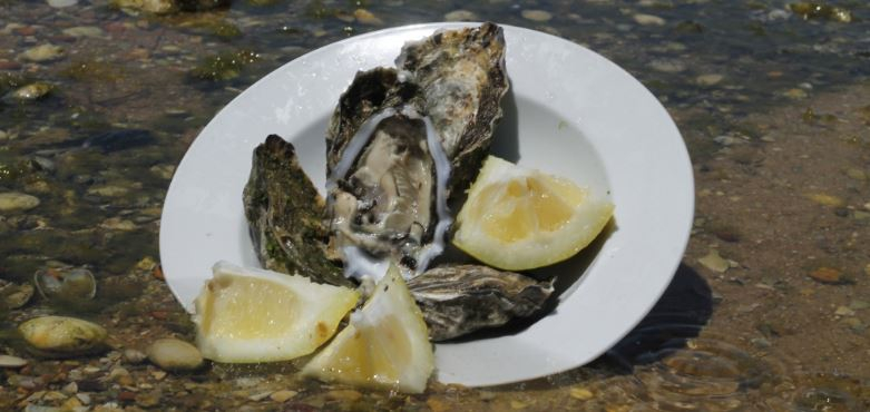 Oyster Tasting Experience