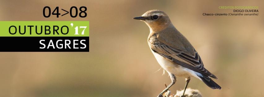 Sagres Birdwatching Festival 2017