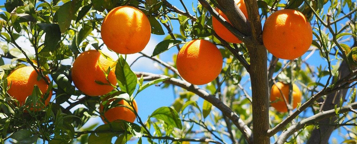 Silves, Orange Capital