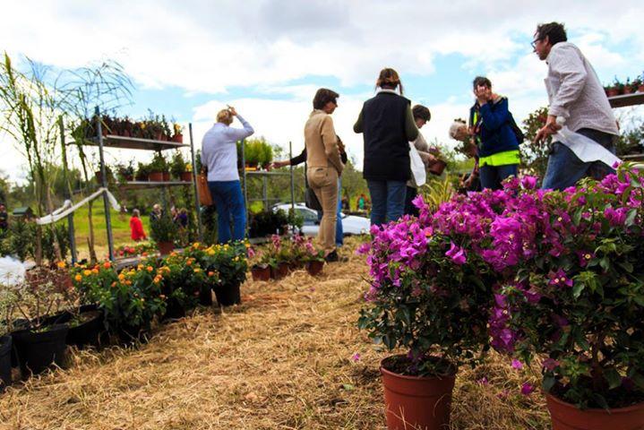 Spring Garden Fair 2017