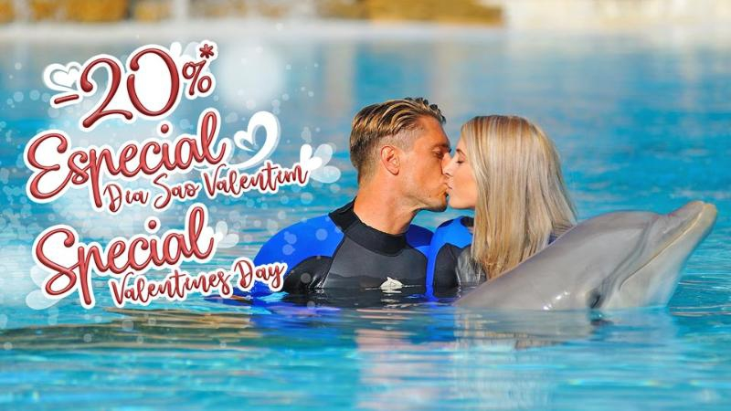 Valentine's with the Dolphins at Zoomarine