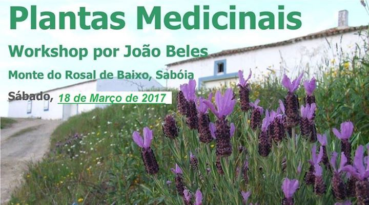 Workshop Plantas Medicinais - €20 p/pax