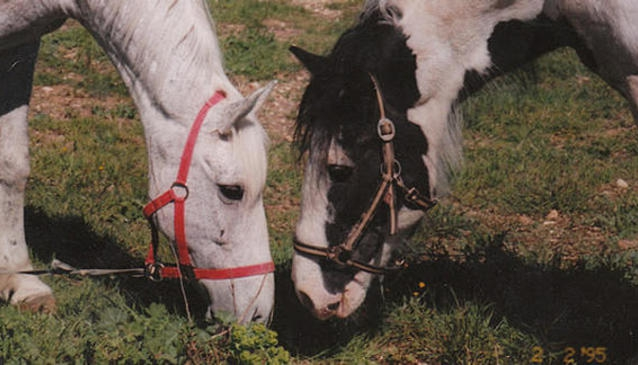 Alcosser equestrian centre