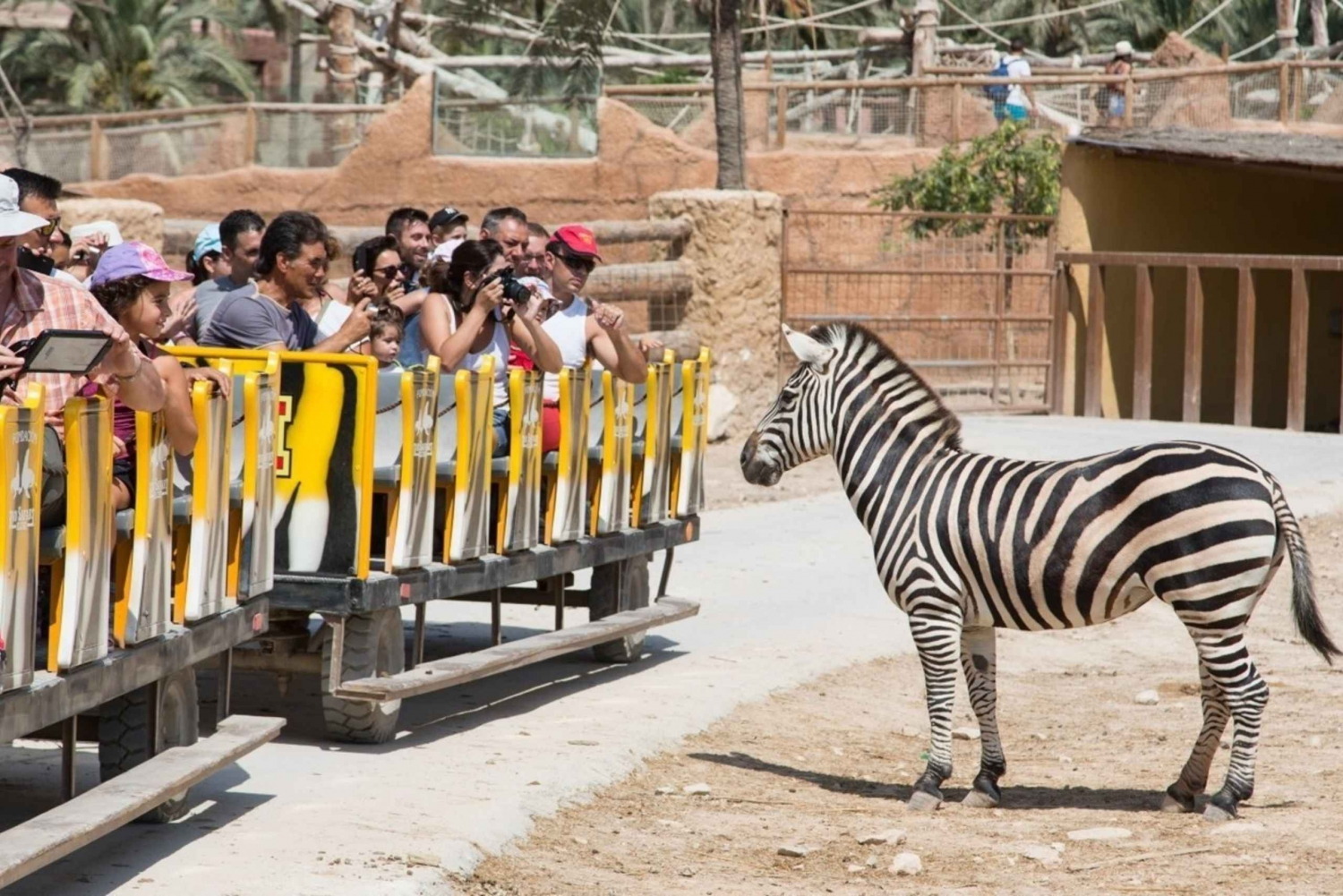 Day Trip to Rio Safari Elche from Benidorm