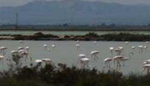 La Mata-Torrevieja Lagoons