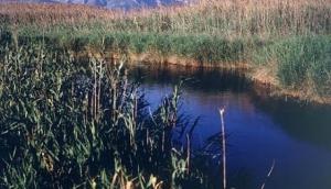 Pego-Oliva Marjal Natural Park