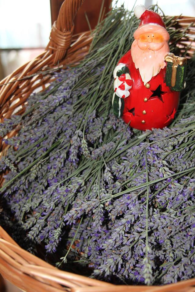 St Nicholas Day Fiesta at the Lavender Gardens
