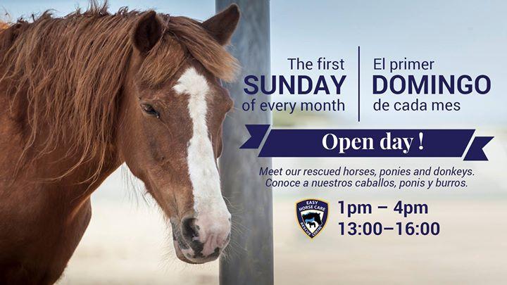 Open day // Jornada de puertas abiertas