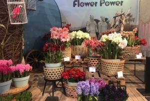 Amsterdam: Keukenhof Tulip Garden and Giethoorn Experience
