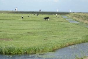 Amsterdam: Volendam, Edam and Windmills Live Guided Tour
