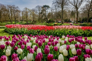 Day Trip to Keukenhof Flower Park