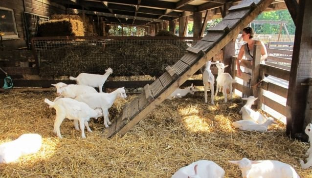 De Ridammerhoeve - Goat Farm