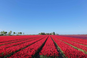 From Day Trip to Keukenhof, Tulips Fields & Delft