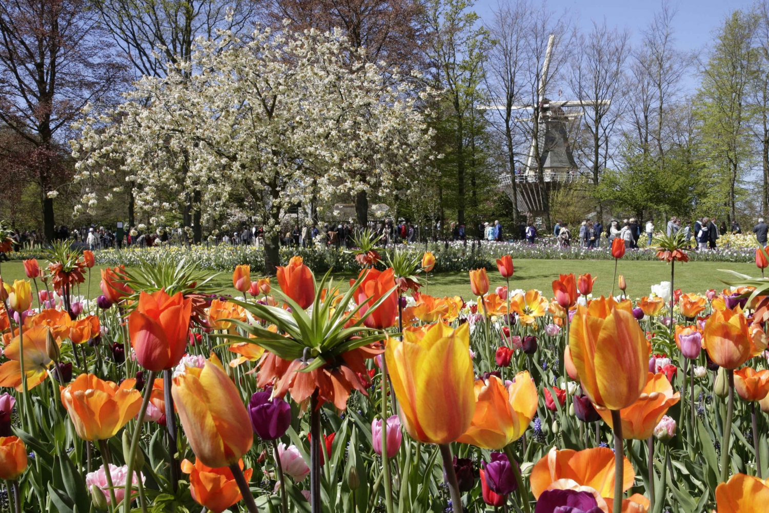From Fast-Track Keukenhof Ticket and Transfer