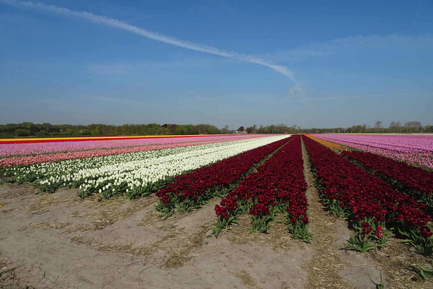 From Flower Fields Private Tour
