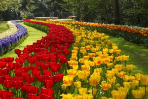 Guided Half-Day Tour to Keukenhof from Amsterdam