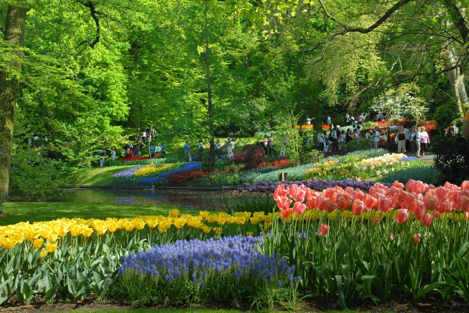 Half-Day Keukenhof Guided Tour with Entrance