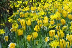 Keukenhof: Flower Fields Small-Group Cultural Bike Tour