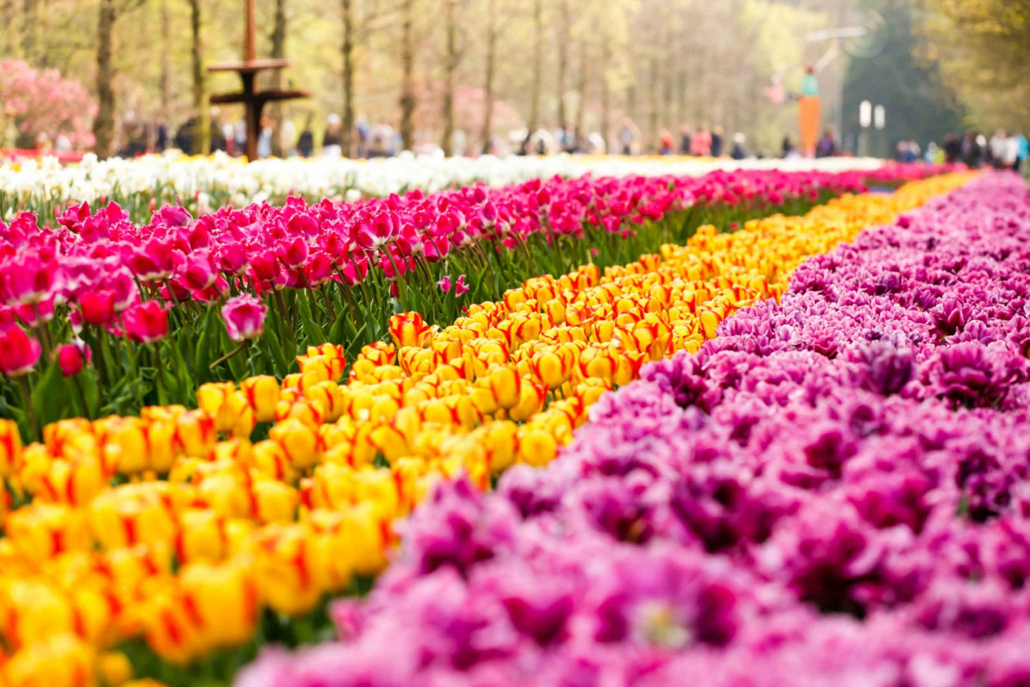 Keukenhof Half-Day Guided Tour with Free 1-Hour Canal Cruise
