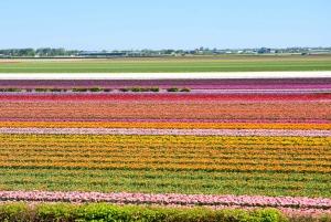 Keukenhof Park and Flower Fields from Rotterdam