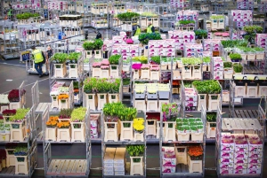 Royal Flower Auction and Amsterdam Castle Tour