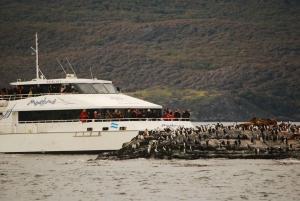 Ushuaia: Penguin Watching Tour by Catamaran