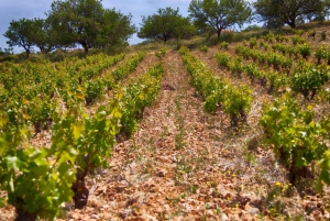From Athens: Private Wine Tour and Lunch at the Seaside