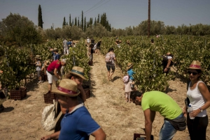 Nemea and Nafplio: Private Wine and History Tour