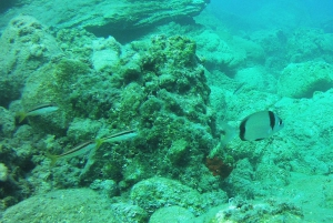 Scuba Diving Experience at the Seaside of Athens