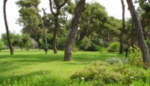 Zappeion Garden