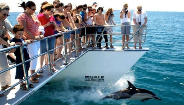 Whale and Dolphin Spotting In Auckland