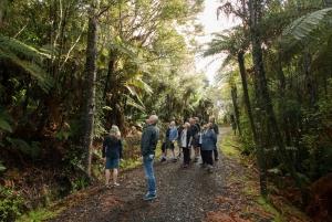 Auckland City, Beaches & Rainforest Premium Small Group Tour