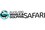 Auckland Whale and Dolphin Safari