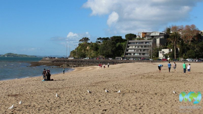 Mission bay beach in auckland my guide auckland - Mission bay swimming pool auckland ...
