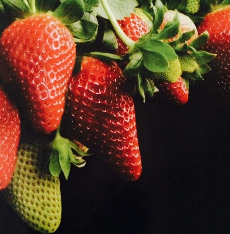 Perrys Berrys Strawberry Farm