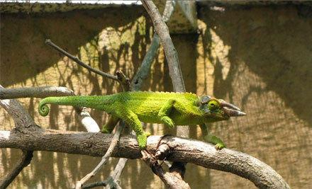 Ti Point Reptile Park