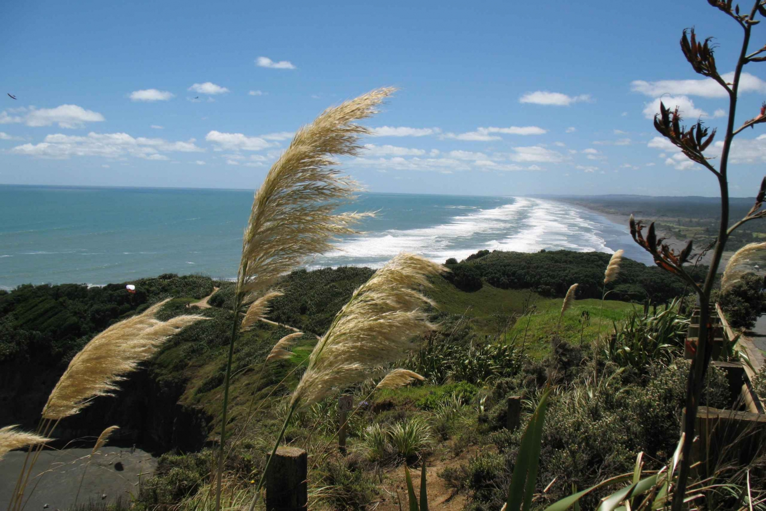 Vineyards, Honey, & Black Sand Beaches Tour from Auckland