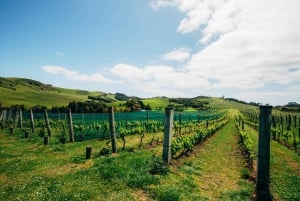 Waiheke Island Food and Wine Tasting Tour from Auckland