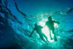 Waiheke Island Guided Snorkeling Tour
