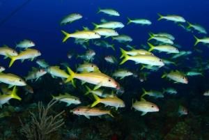 Grand Bahama – Half Day Beginner Scuba Diving Program