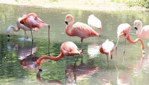 Great Lake Preserve